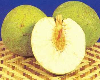 Will-breadfruit-solve-the-world-hunger- cachedthe fruit at the sub